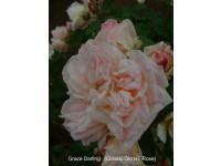 Grace Darling